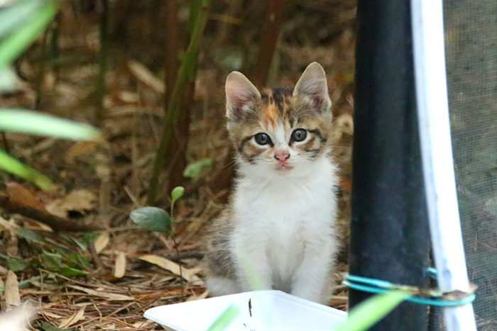 Kitten1605_003.jpg