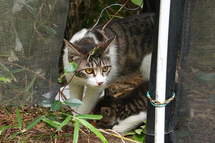 Kitten1605_009.jpg