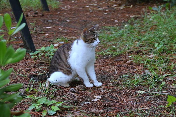 Kitten1605_012.jpg