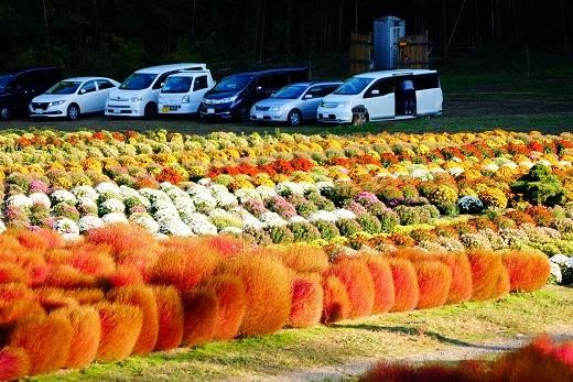 伊賀野の花畑