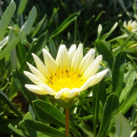 2018-10-02-薄い黄色の花