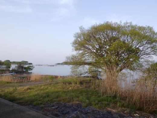 琵琶湖朝 (3)