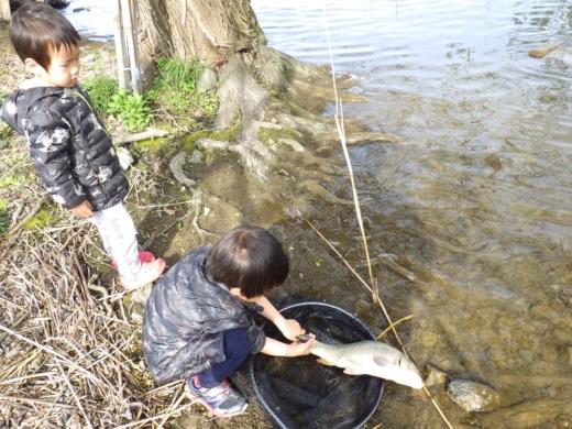 琵琶湖1匹目 (1)