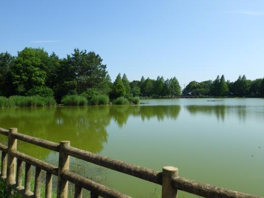 松伏総合公園 (11)