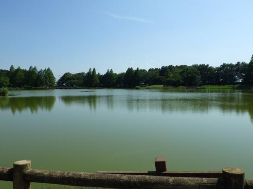 松伏総合公園 (12)