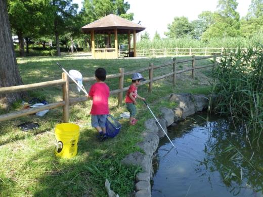 松伏の池 (3)