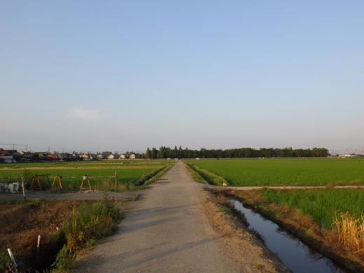 田んぼの用水路 (8)