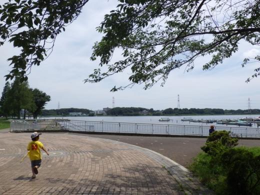 手賀沼公園 (4)
