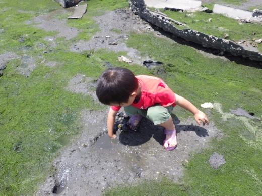 江戸川放水路ハゼ釣り (22)