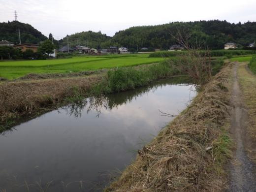 千葉の田んぼ (4)