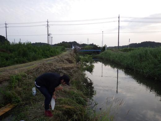 千葉の田んぼ (5)