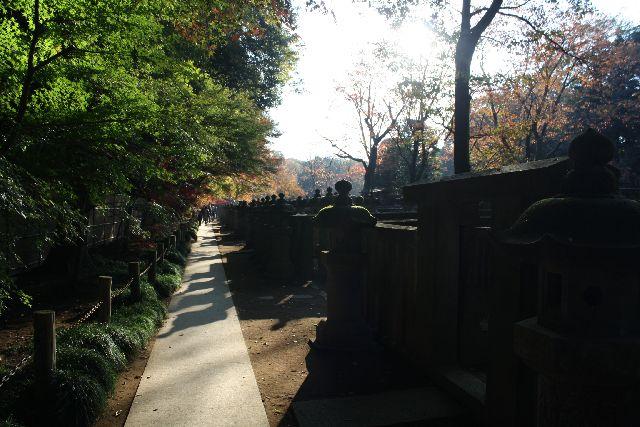 平林寺の墓地