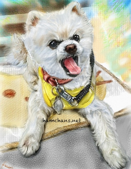 柴犬カットのポメラニアンのイラスト