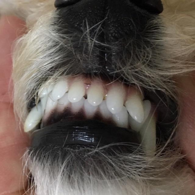 2016年6月ココ前歯