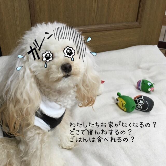 ココモコ家マイホーム2
