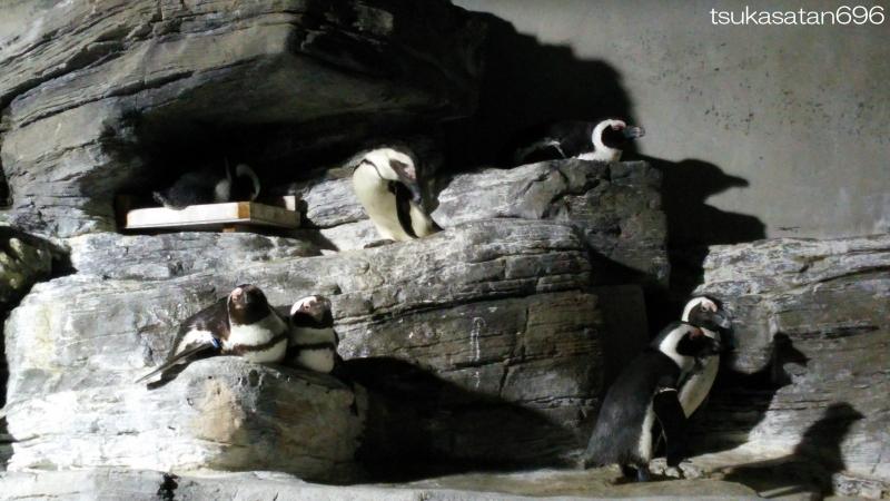 20150504_penguin_02
