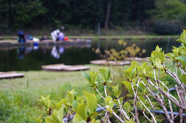 前山の池005