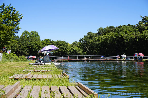 前山の池033