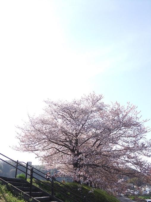 2016041120135348b.jpg