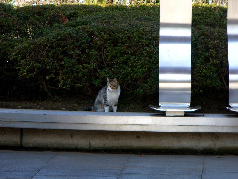 公園長いベンチのキジ白猫2