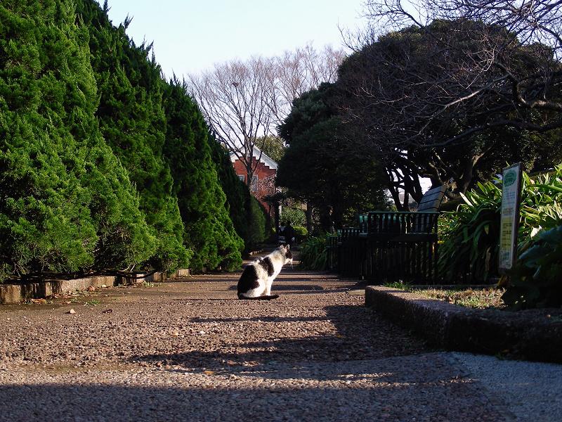 公園通路の黒白猫1