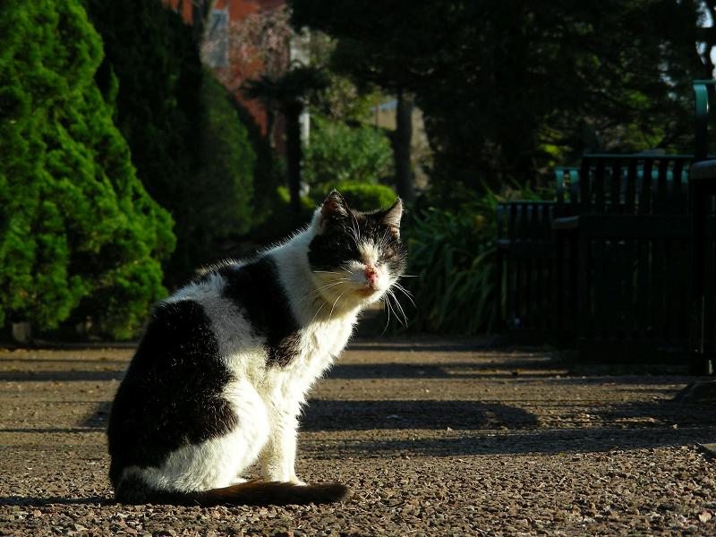 公園通路の黒白猫3