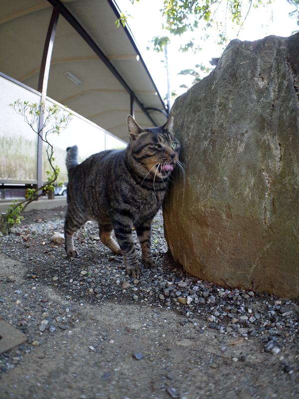 石碑とキジトラ猫1