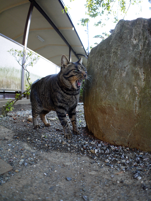 石碑とキジトラ猫2