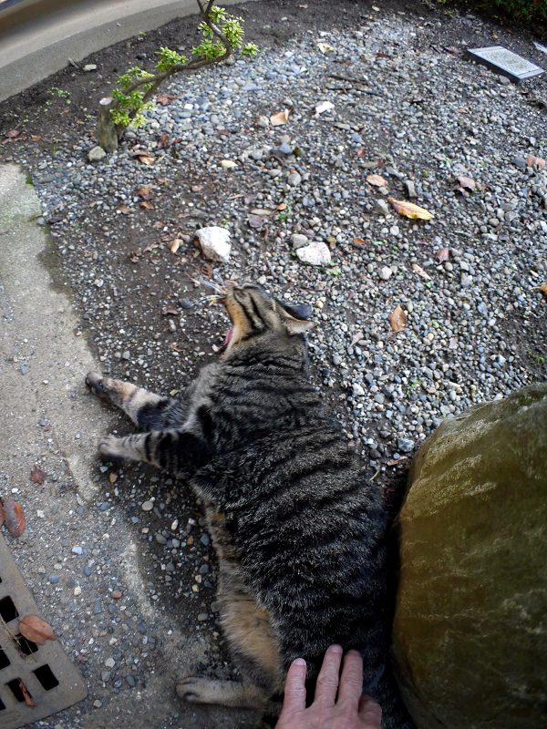 石碑とキジトラ猫3