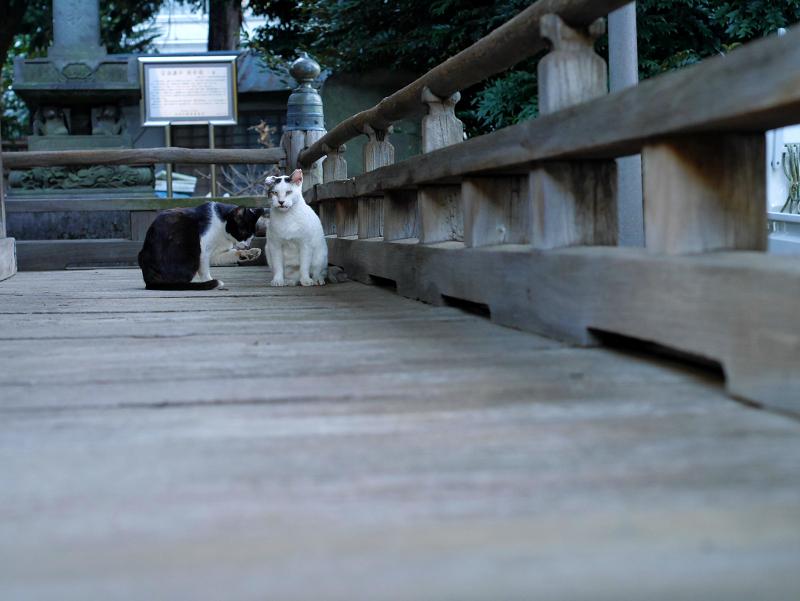 古堂濡れ縁の猫たち3