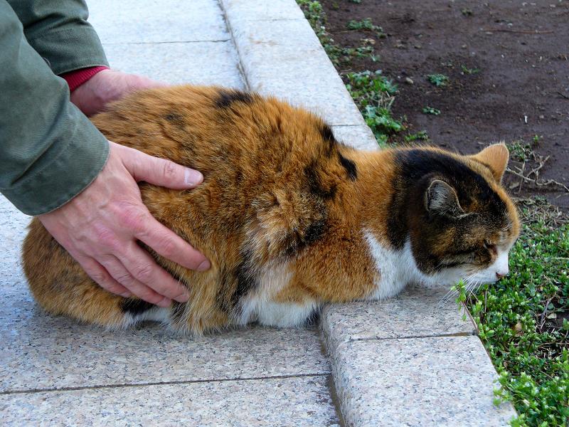 コンクリベンチの三毛猫2