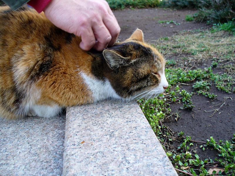 コンクリベンチの三毛猫3