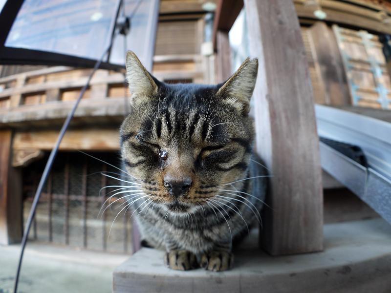 階段端に座ってるキジトラ猫2