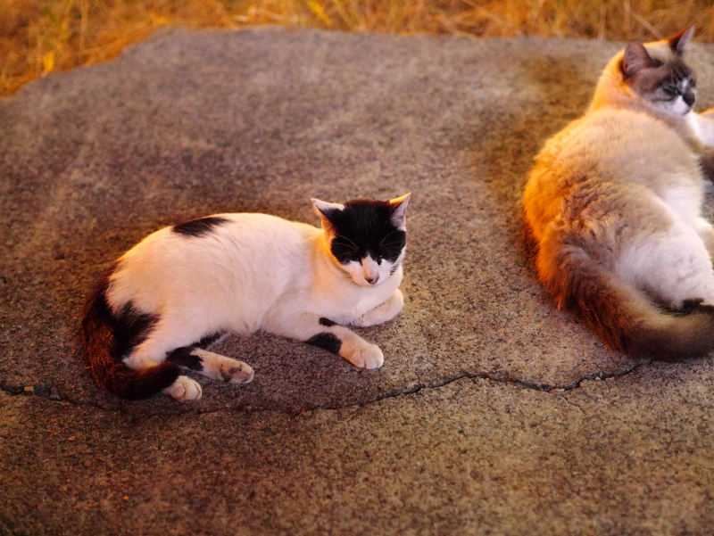 夜の空き地の猫たち1