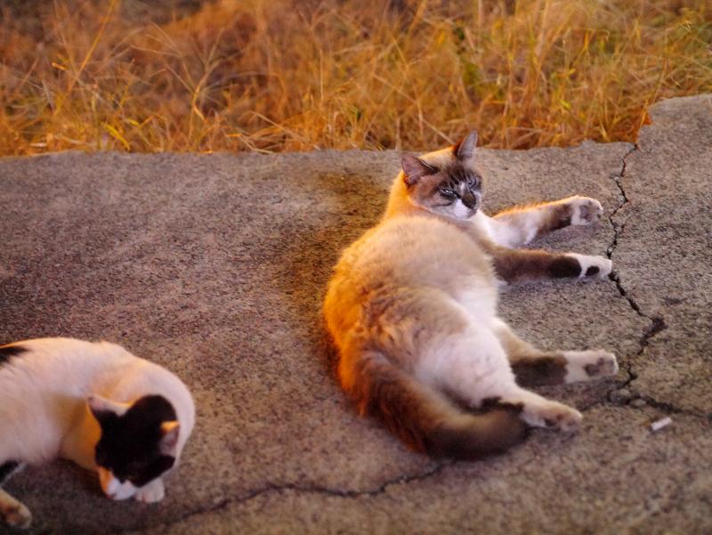 夜の空き地の猫たち2
