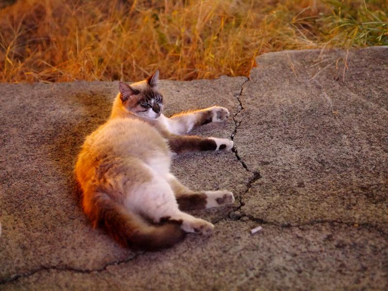 夜の空き地の猫たち3