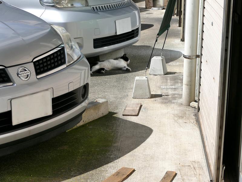 車と白黒猫1