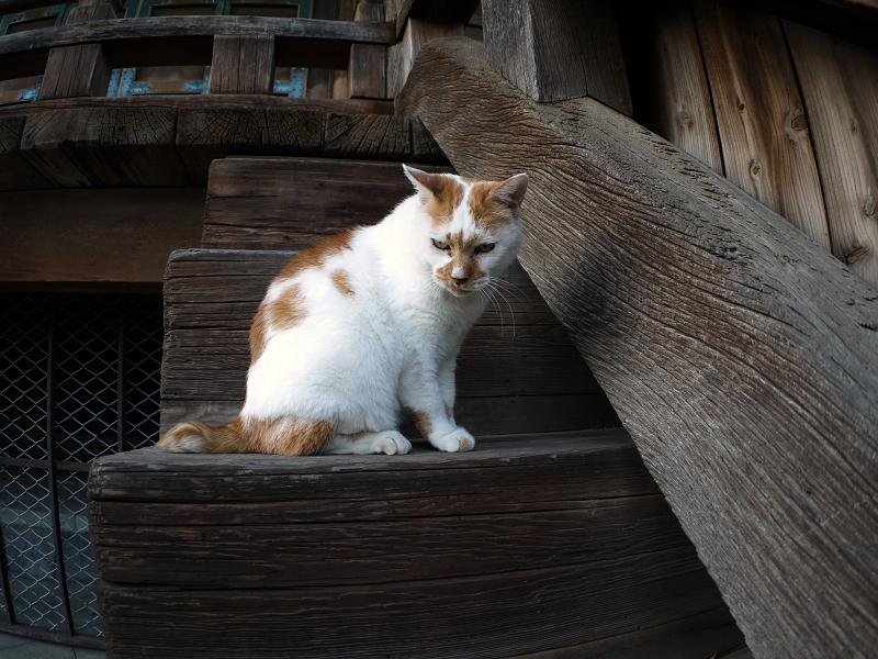 階段の端の茶白猫3