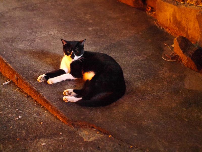 夜の空き地の黒白猫2