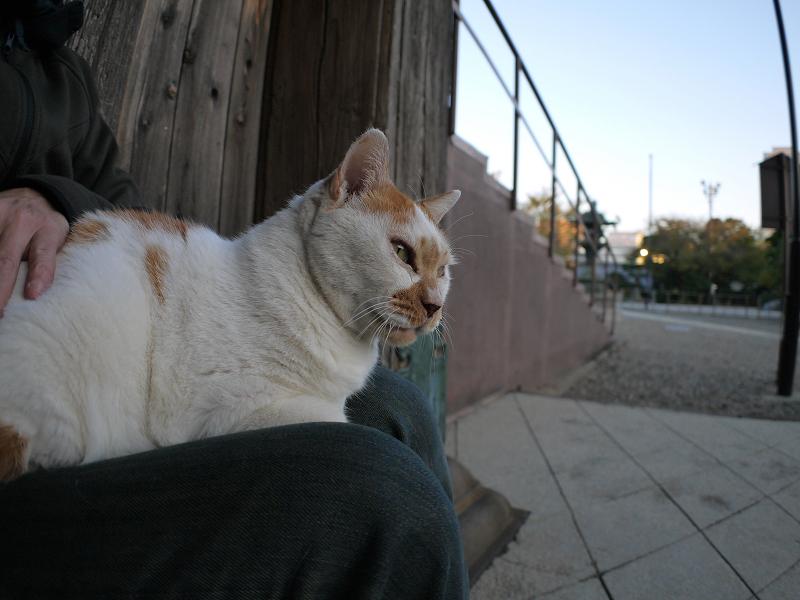 本堂階段横の茶白猫2