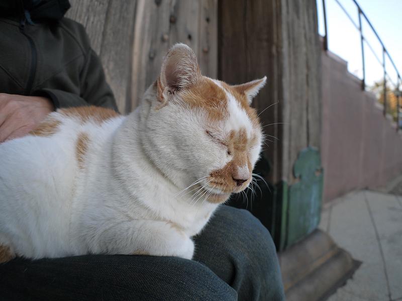 本堂階段横の茶白猫3