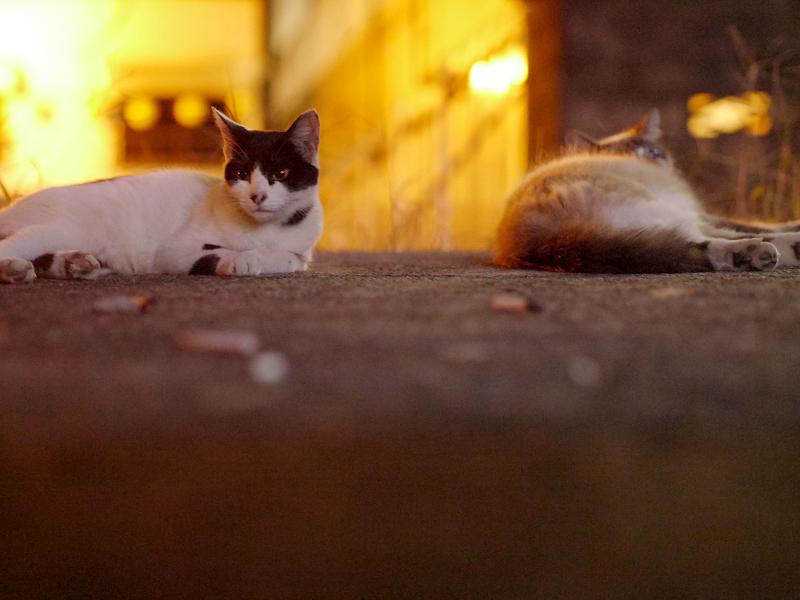 街灯に照らされた空き地の猫たち1
