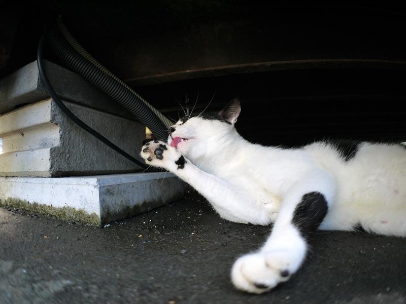 コンテナの下で毛づくろいの白黒猫1