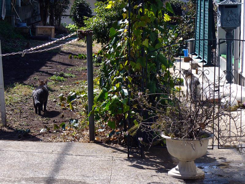 庭先と空き地の猫たち1