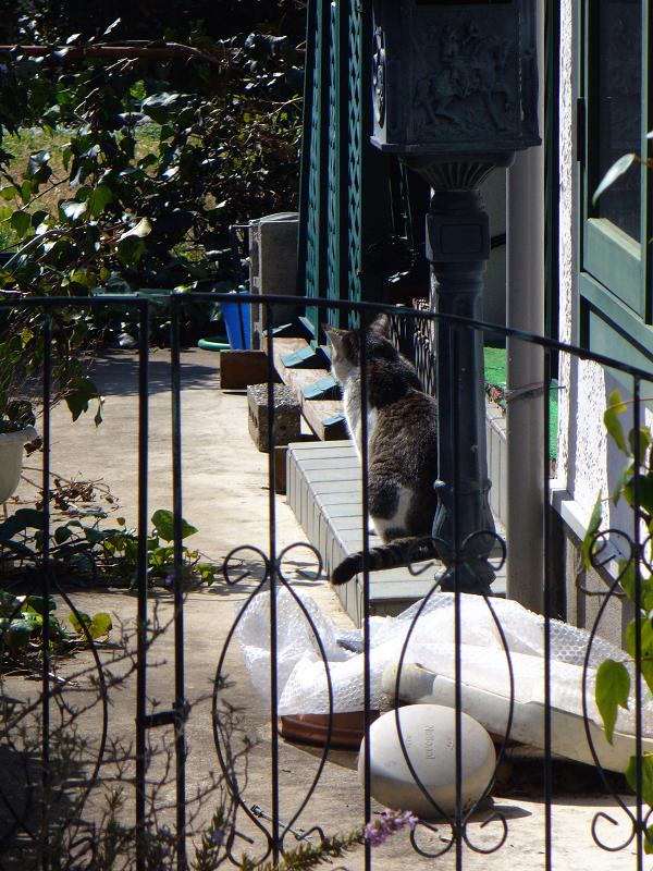 庭先と空き地の猫たち2