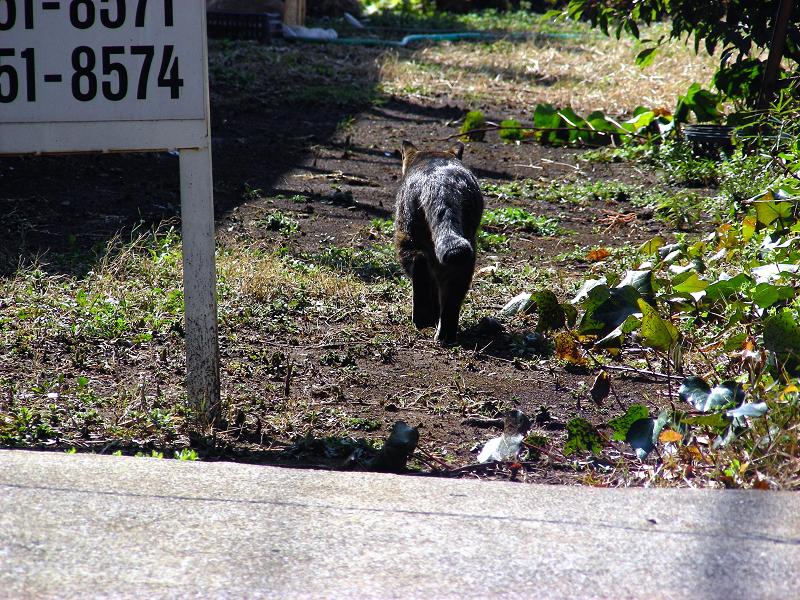 庭先と空き地の猫たち3
