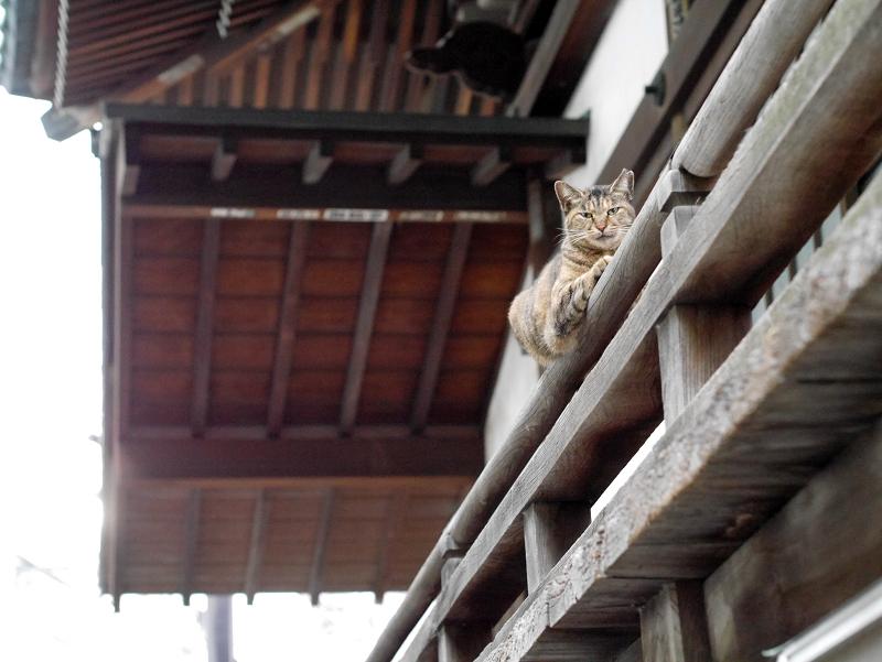 欄干のサビ柄猫1