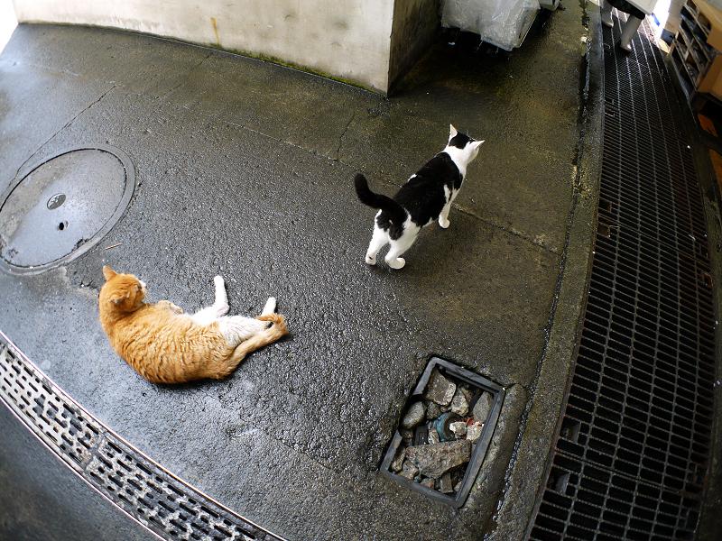 トロ箱の蓋と猫たち2