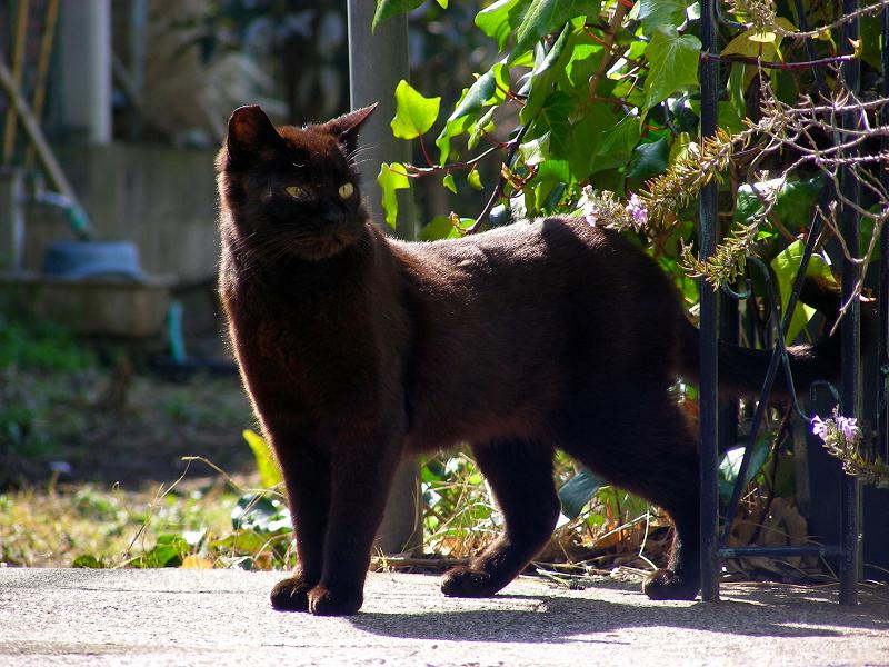 空き地から出てきた黒猫2