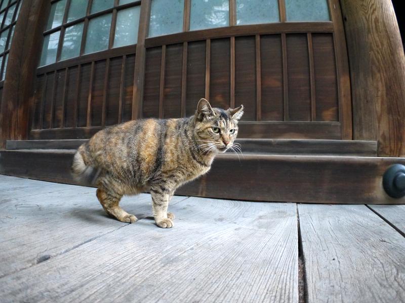 お寺の猫たち1